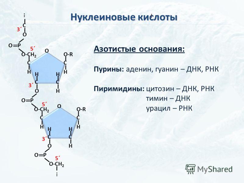 Нуклеиновые кислоты C O H C H H C H O-R C H O-СH 2 PO C O H C H H C H O-R C H O-СH 2 PO C O PO O O … … 3´ 5´ 3´ 5´ 3´ 5´ … Азотистые основания: Пурины: аденин, гуанин – ДНК, РНК Пиримидины: цитозин – ДНК, РНК тимин – ДНК урацил – РНК