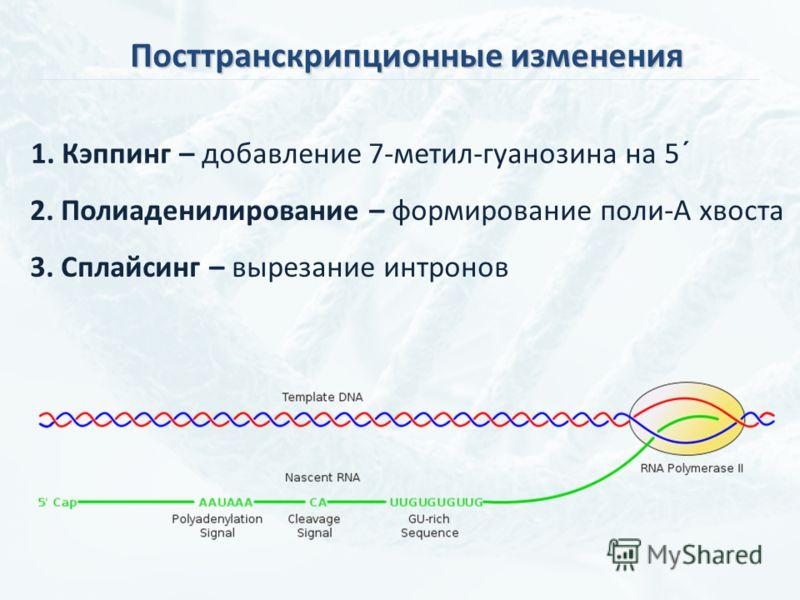 Посттранскрипционные изменения 1. Кэппинг – добавление 7-метил-гуанозина на 5´ 2. Полиаденилирование – формирование поли-А хвоста 3. Сплайсинг – вырезание интронов