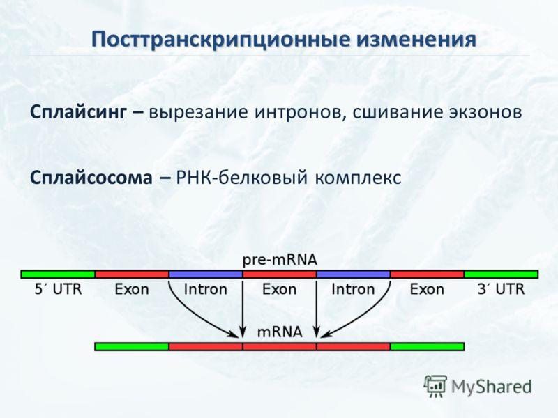 Посттранскрипционные изменения Сплайсинг – вырезание интронов, сшивание экзонов Сплайсосома – РНК-белковый комплекс