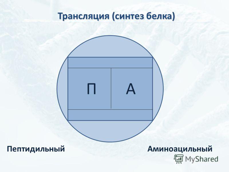 АП ПептидильныйАминоацильный