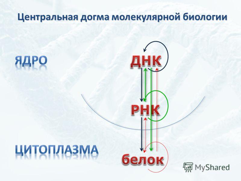 Центральная догма молекулярной биологии