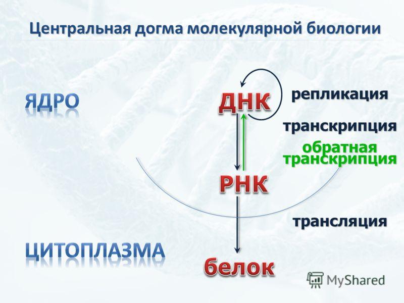 репликация обратнаятранскрипция трансляция транскрипция