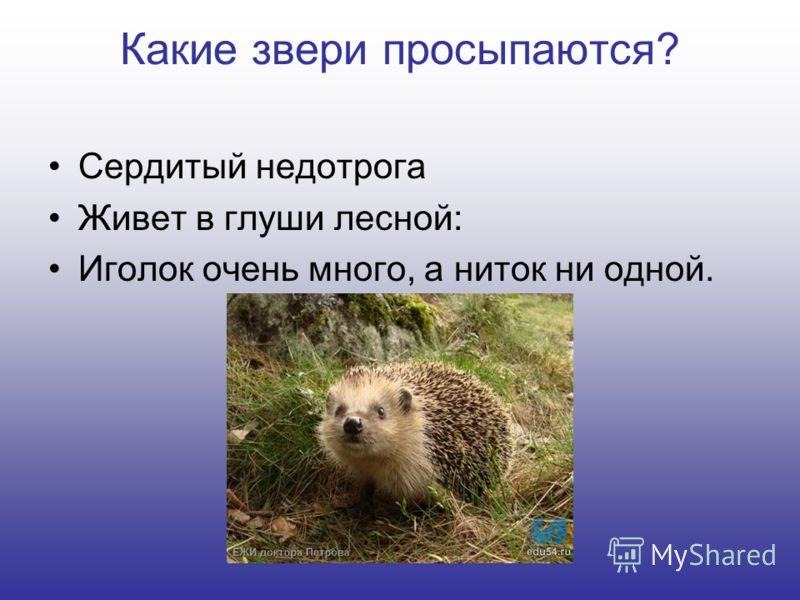 Какие звери просыпаются? Сердитый недотрога Живет в глуши лесной: Иголок очень много, а ниток ни одной.