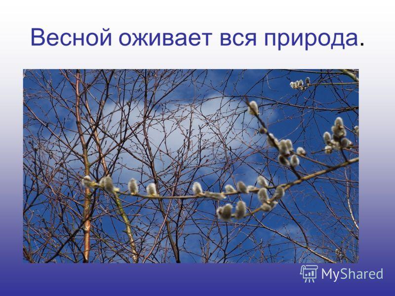 Весной оживает вся природа.