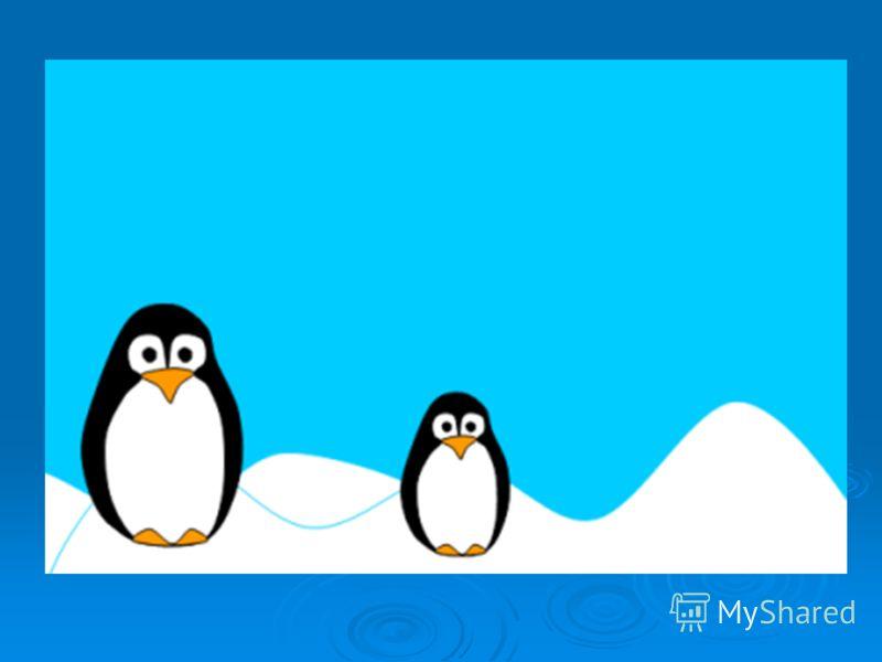 Пингвин Маккуори или Шлегеля (лат. Eudyptes schlegeli) вид хохлатых пингвинов, эндемики острова Маккуори. Пингвин Маккуори или Шлегеля (лат. Eudyptes schlegeli) вид хохлатых пингвинов, эндемики острова Маккуори. Пингвин Маккуори (Шлегеля) средних раз