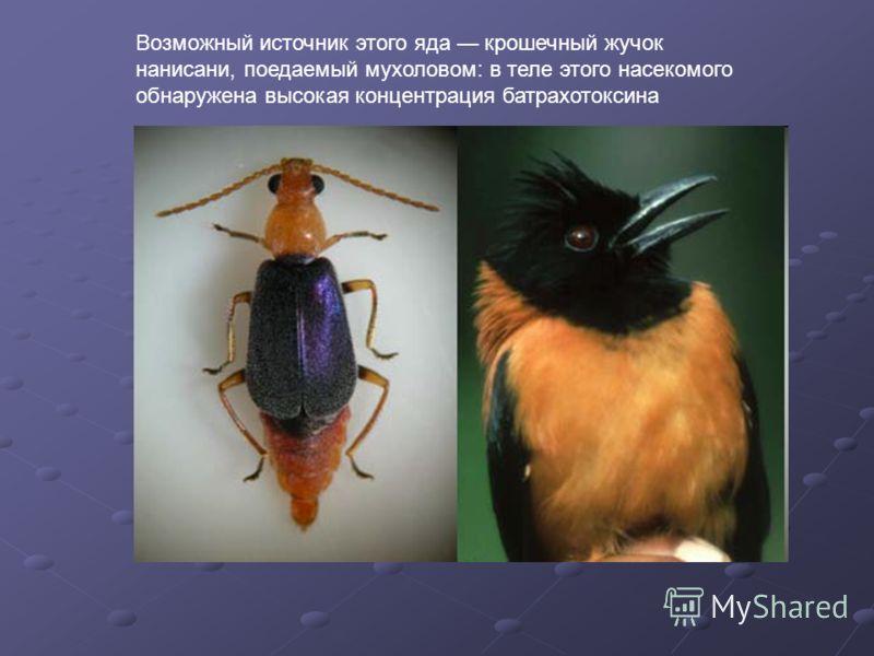 Возможный источник этого яда крошечный жучок нанисани, поедаемый мухоловом: в теле этого насекомого обнаружена высокая концентрация батрахотоксина