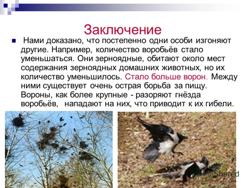 Результаты наблюдения Наши наблюдения показывают, что видовой состав и численность птиц зависят от природных условий, погоды, человеческой деятельности. Птицы обычно преобладают там, где нет хищников и богаче кормовая база. Такие места обычно находят