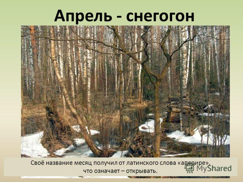 Апрель - снегогон Своё название месяц получил от латинского слова «аперире», что означает – открывать.