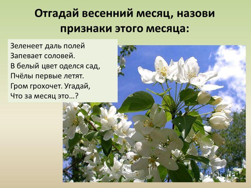 Отгадай весенний месяц, назови признаки этого месяца: Зеленеет даль полей Запевает соловей. В белый цвет оделся сад, Пчёлы первые летят. Гром грохочет. Угадай, Что за месяц это…?