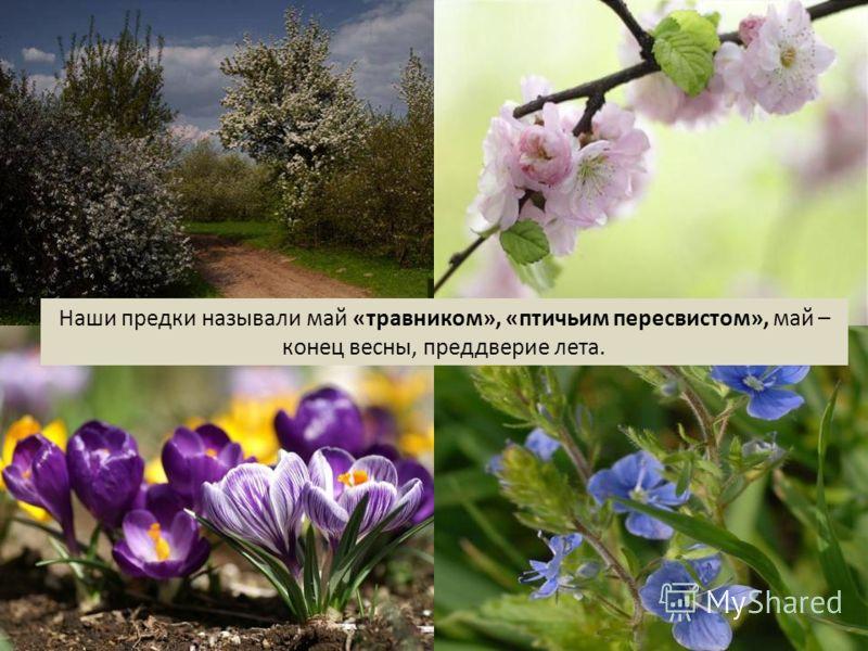 Наши предки называли май «травником», «птичьим пересвистом», май – конец весны, преддверие лета.