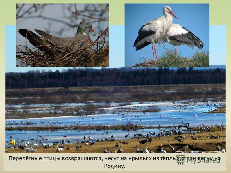 Перелётные птицы возвращаются, несут на крыльях из тёплых стран весну на Родину.