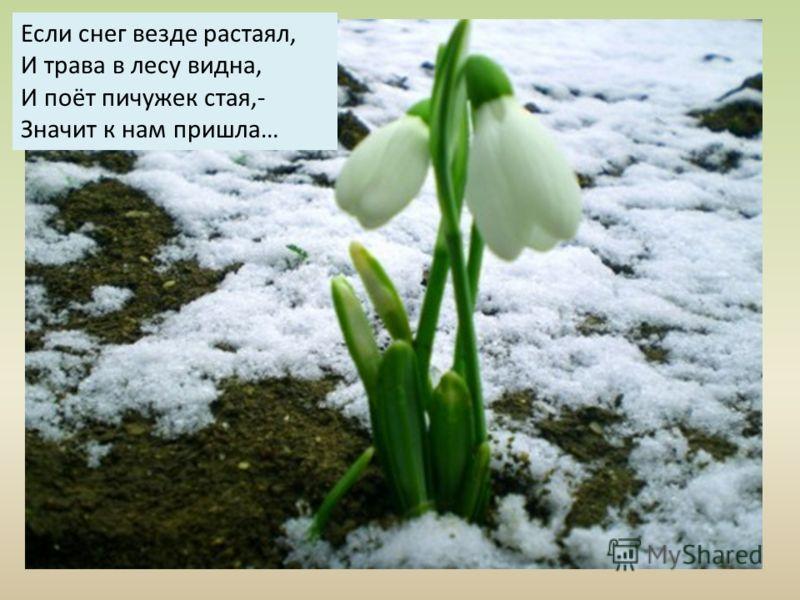 Если снег везде растаял, И трава в лесу видна, И поёт пичужек стая,- Значит к нам пришла…