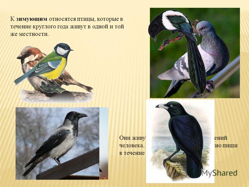 К зимующим относятся птицы, которые в течение круглого года живут в одной и той же местности. Они живут постоянно вблизи поселений человека. Там они находят достаточно пищи в течение круглого года.