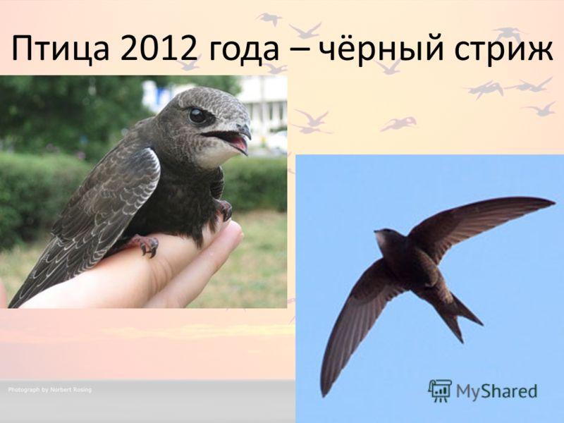 Птица 2012 года – чёрный стриж