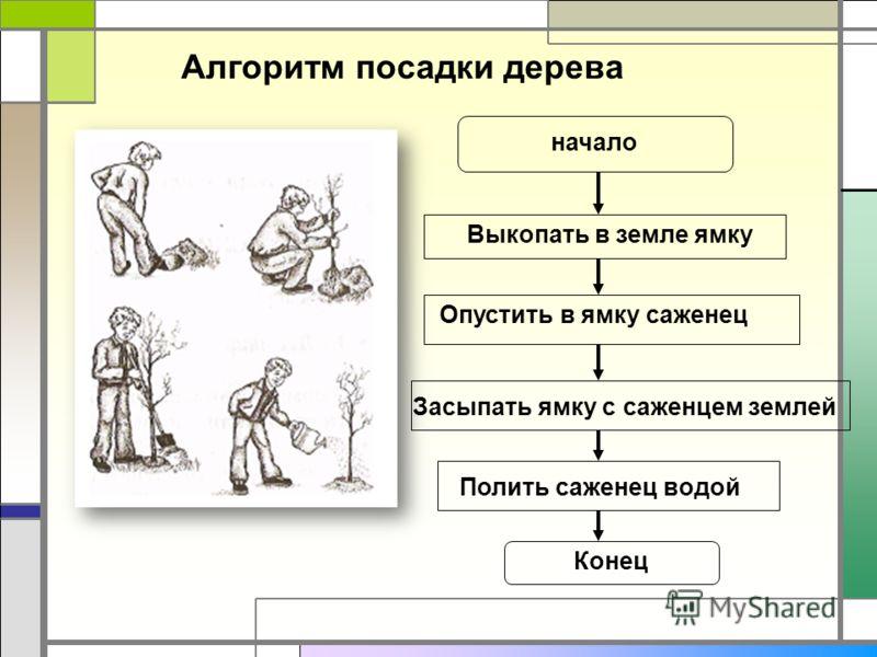 Алгоритм посадки дерева начало Выкопать в земле ямку Опустить в ямку саженец Засыпать ямку с саженцем землей Конец Полить саженец водой