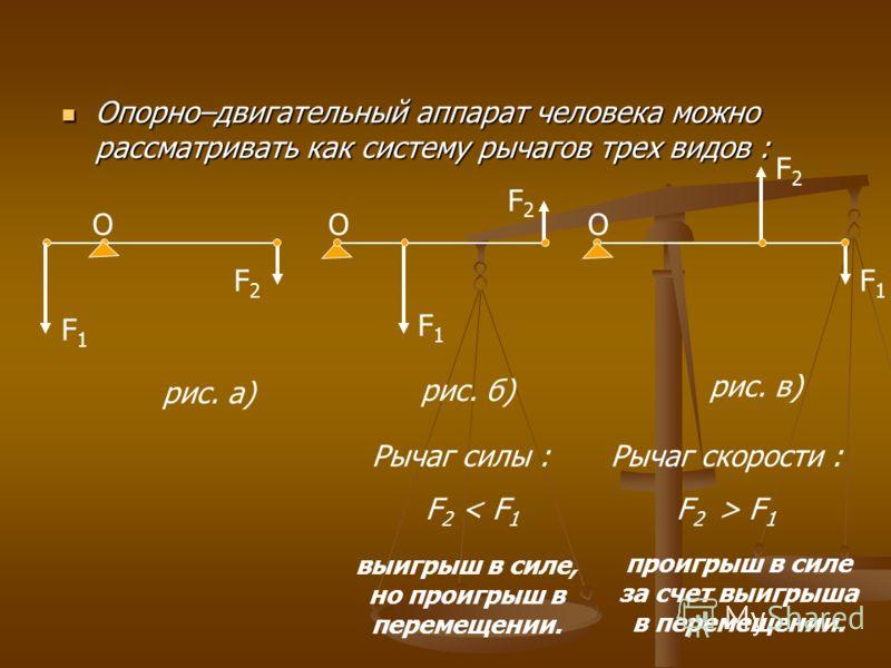 Опорно–двигательный аппарат человека можно рассматривать как систему рычагов трех видов : Опорно–двигательный аппарат человека можно рассматривать как систему рычагов трех видов : F1F1 F2F2 O рис. а) O F1F1 F2F2 рис. б) O F1F1 F2F2 рис. в) Рычаг силы
