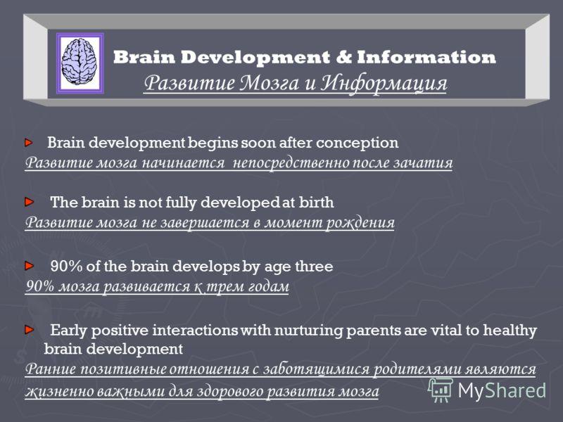 Brain Development & Information Развитие Мозга и Информация Brain development begins soon after conception Развитие мозга начинается непосредственно после зачатия The brain is not fully developed at birth Развитие мозга не завершается в момент рожден