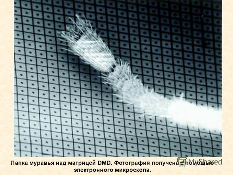 Лапка муравья над матрицей DMD. Фотография получена с помощью электронного микроскопа.