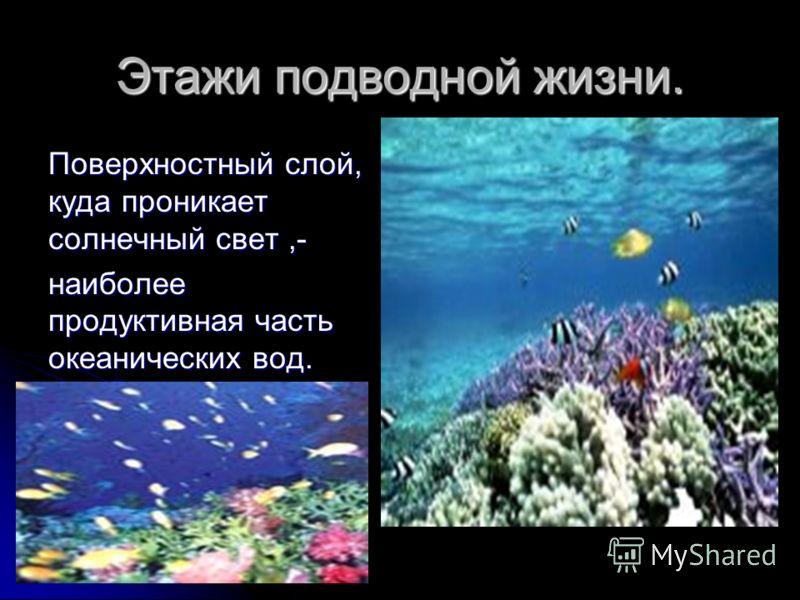 Этажи подводной жизни. Поверхностный слой, куда проникает солнечный свет,- наиболее продуктивная часть океанических вод.