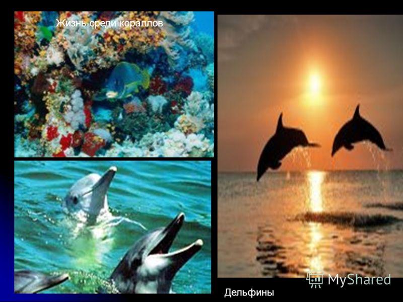 Жизнь среди кораллов Дельфины