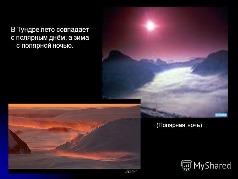 В Тундре лето совпадает с полярным днём, а зима – с полярной ночью. (Полярная ночь)