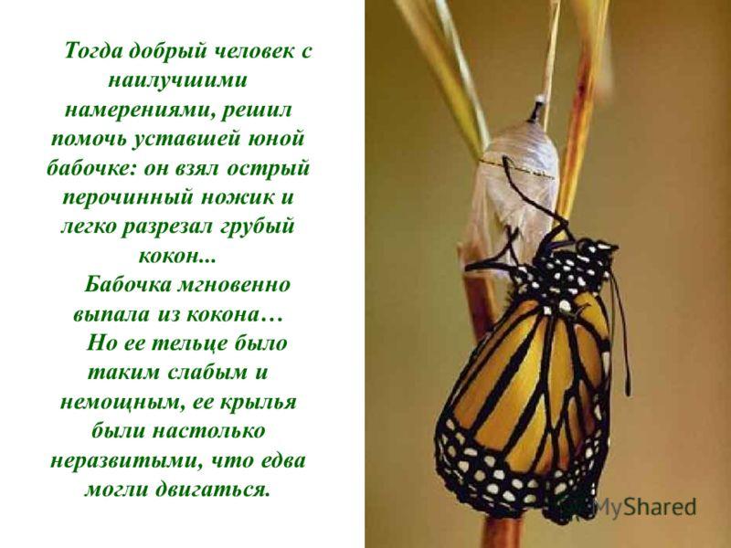 Тогда добрый человек с наилучшими намерениями, решил помочь уставшей юной бабочке: он взял острый перочинный ножик и легко разрезал грубый кокон... Бабочка мгновенно выпала из кокона… Но ее тельце было таким слабым и немощным, ее крылья были настольк
