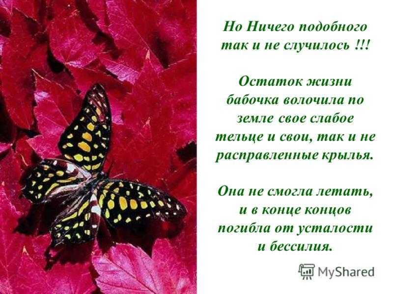 Но Ничего подобного так и не случилось !!! Остаток жизни бабочка волочила по земле свое слабое тельце и свои, так и не расправленные крылья. Она не смогла летать, и в конце концов погибла от усталости и бессилия.