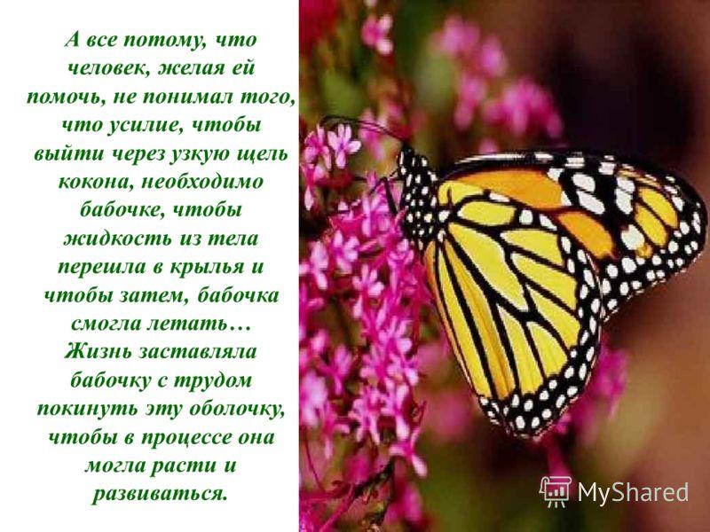 А все потому, что человек, желая ей помочь, не понимал того, что усилие, чтобы выйти через узкую щель кокона, необходимо бабочке, чтобы жидкость из тела перешла в крылья и чтобы затем, бабочка смогла летать… Жизнь заставляла бабочку с трудом покинуть