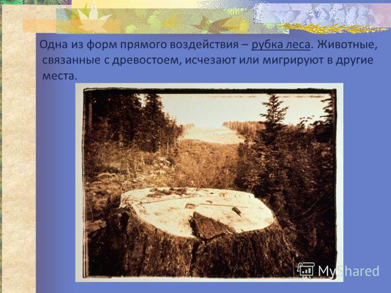 Одна из форм прямого воздействия – рубка леса. Животные, связанные с древостоем, исчезают или мигрируют в другие места.