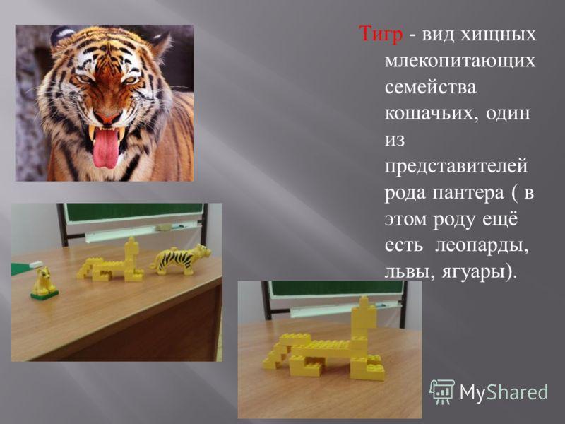 Тигр - вид хищных млекопитающих семейства кошачьих, один из представителей рода пантера ( в этом роду ещё есть леопарды, львы, ягуары ).