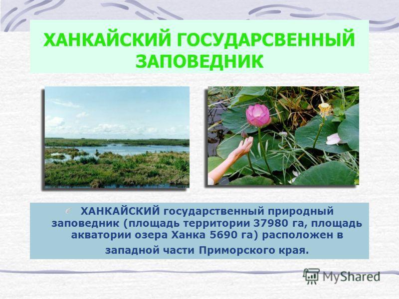 ХАНКАЙСКИЙ ГОСУДАРСВЕННЫЙ ЗАПОВЕДНИК ХАНКАЙСКИЙ государственный природный заповедник (площадь территории 37980 га, площадь акватории озера Ханка 5690 га) расположен в западной части Приморского края.
