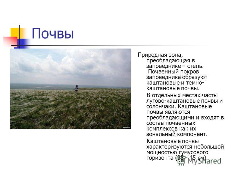 Почвы Природная зона, преобладающая в заповеднике – степь. Почвенный покров заповедника образуют каштановые и темно- каштановые почвы. В отдельных местах часты лугово-каштановые почвы и солончаки. Каштановые почвы являются преобладающими и входят в с