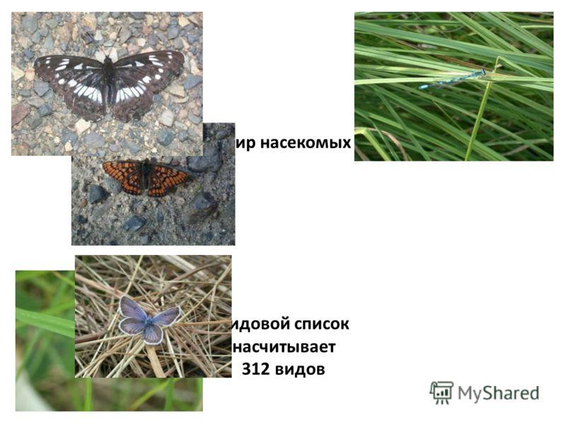 Разнообразен мир насекомых заповедника. Видовой список насчитывает 312 видов