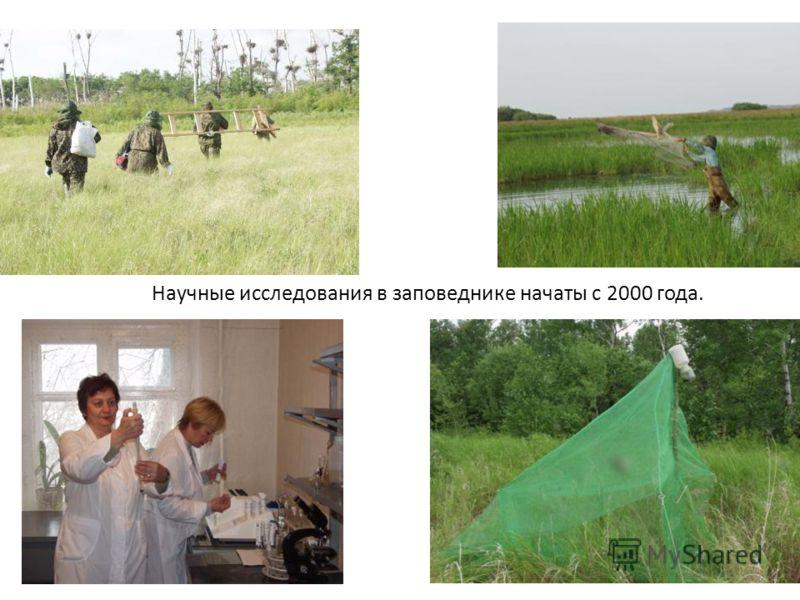 Научные исследования в заповеднике начаты с 2000 года.