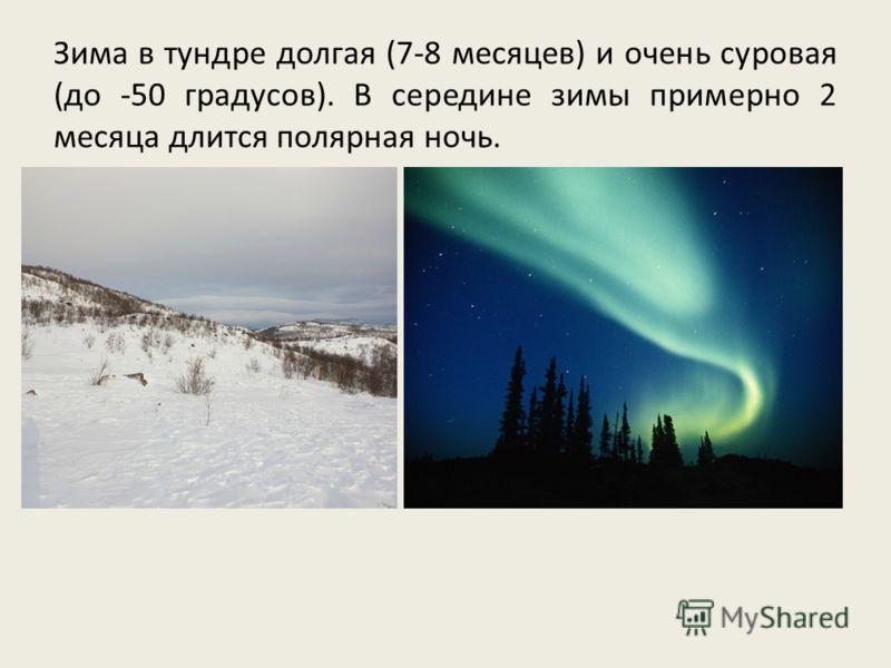 Зима в тундре долгая (7-8 месяцев) и очень суровая (до -50 градусов). В середине зимы примерно 2 месяца длится полярная ночь.