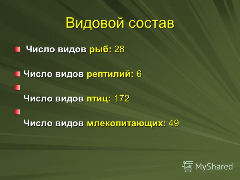 Видовой состав Число видов рыб: 28 Число видов рыб: 28 Число видов рептилий: 6 Число видов птиц: 172 Число видов млекопитающих: 49