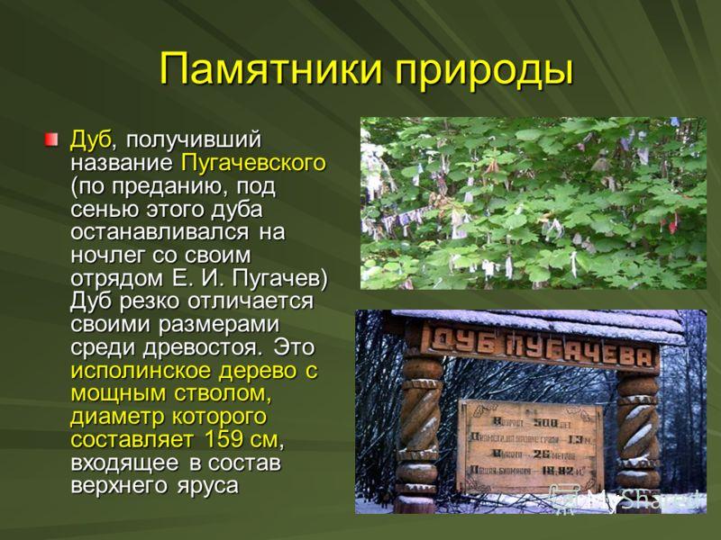 Памятники природы Памятники природы Дуб, получивший название Пугачевского (по преданию, под сенью этого дуба останавливался на ночлег со своим отрядом Е. И. Пугачев) Дуб резко отличается своими размерами среди древостоя. Это исполинское дерево с мощн