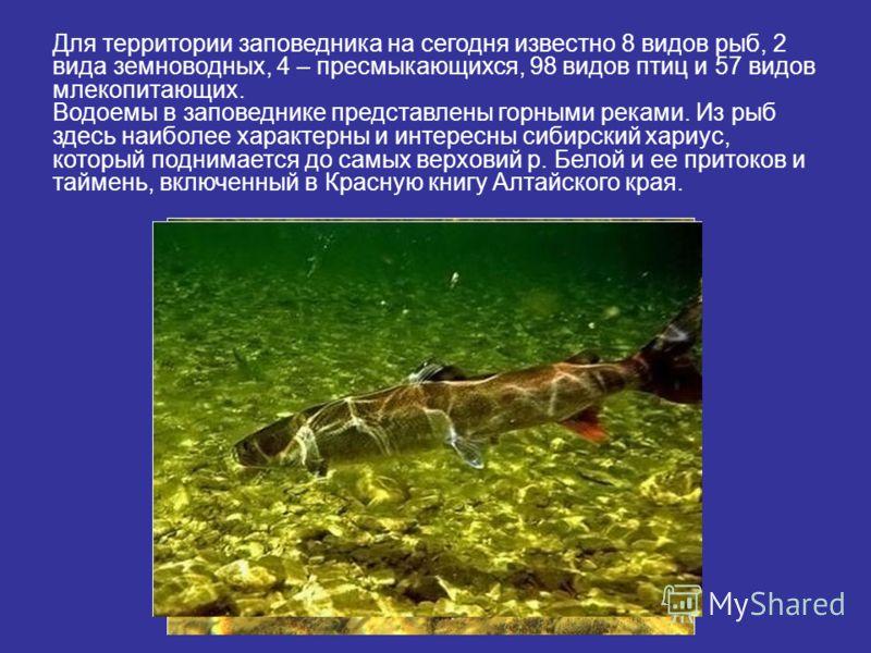 Для территории заповедника на сегодня известно 8 видов рыб, 2 вида земноводных, 4 – пресмыкающихся, 98 видов птиц и 57 видов млекопитающих. Водоемы в заповеднике представлены горными реками. Из рыб здесь наиболее характерны и интересны сибирский хари