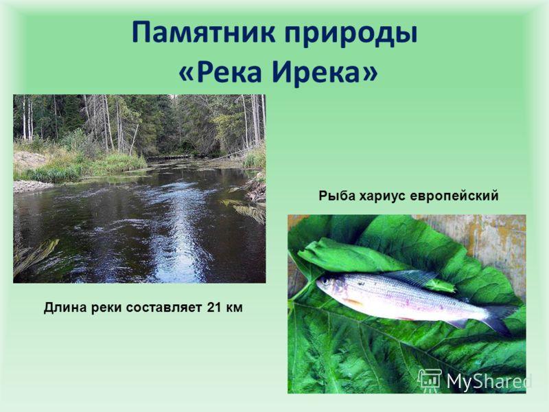 Памятник природы «Река Ирека» Длина реки составляет 21 км Рыба хариус европейский