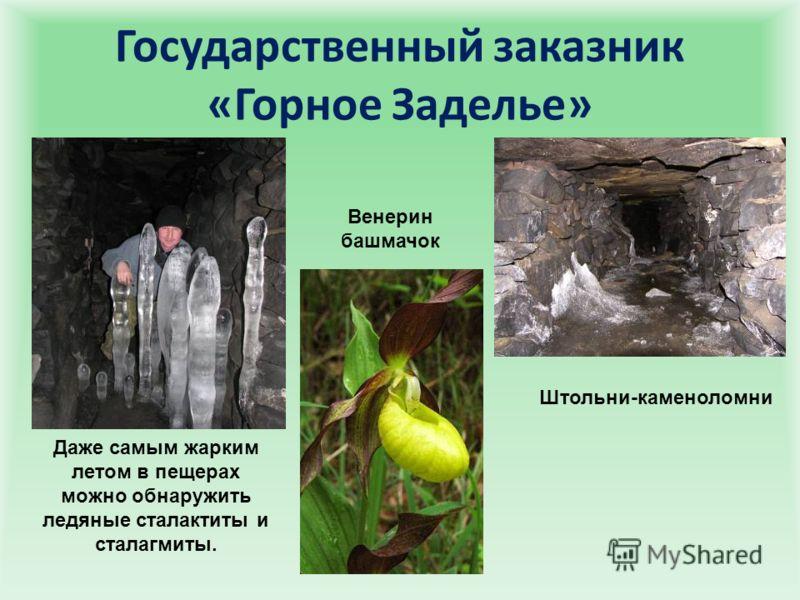 Государственный заказник «Горное Заделье» Штольни-каменоломни Венерин башмачок Даже самым жарким летом в пещерах можно обнаружить ледяные сталактиты и сталагмиты.