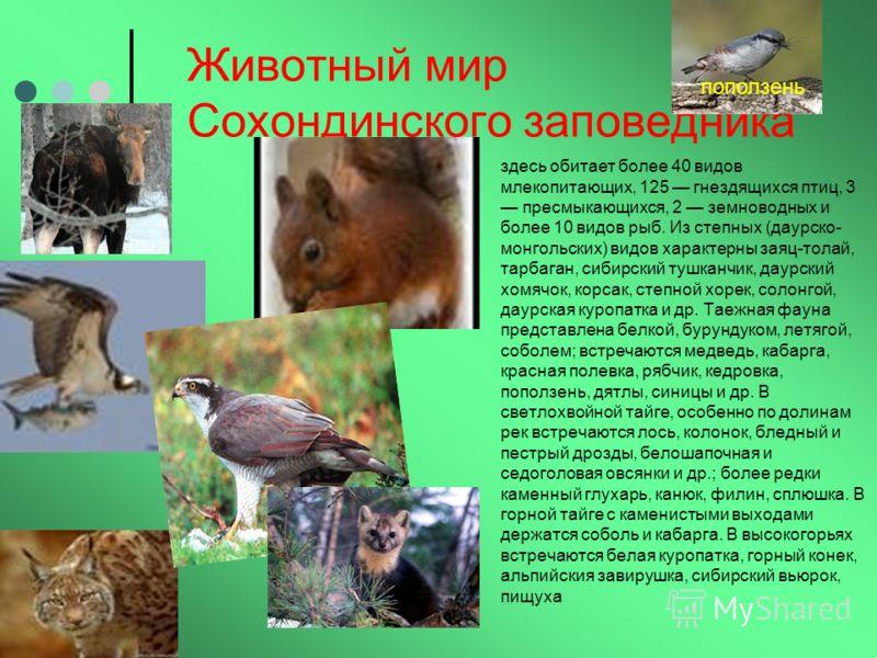 Животный мир Сохондинского заповедника здесь обитает более 40 видов млекопитающих, 125 гнездящихся птиц, 3 пресмыкающихся, 2 земноводных и более 10 видов рыб. Из степных (даурско- монгольских) видов характерны заяц-толай, тарбаган, сибирский тушканчи