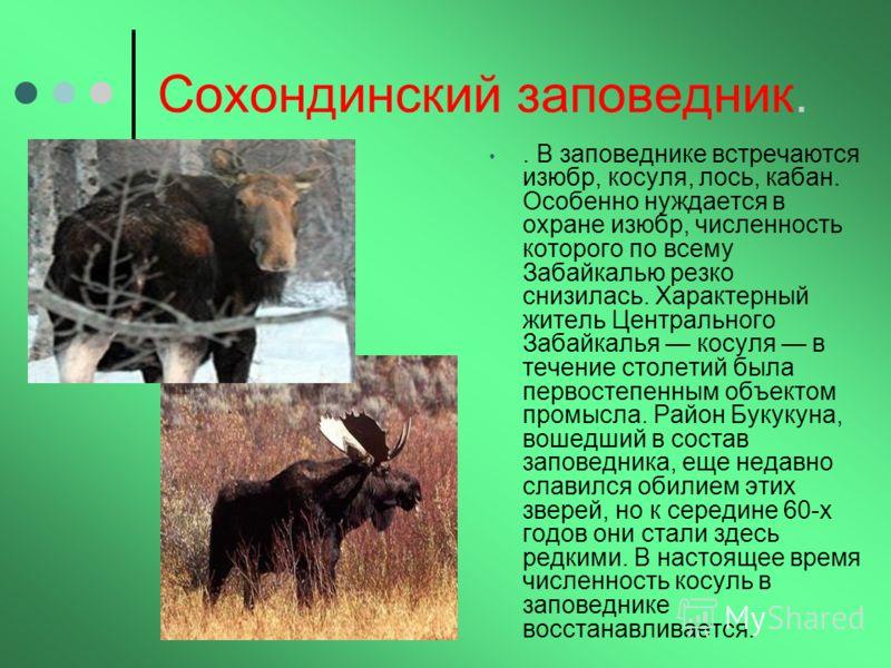 Сохондинский заповедник.. В заповеднике встречаются изюбр, косуля, лось, кабан. Особенно нуждается в охране изюбр, численность которого по всему Забайкалью резко снизилась. Характерный житель Центрального Забайкалья косуля в течение столетий была пер