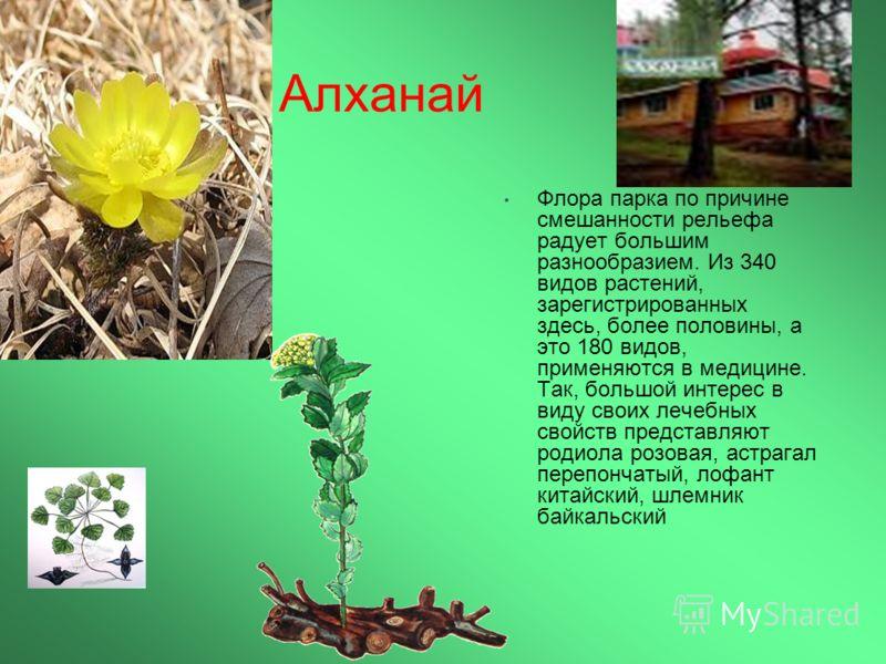 Алханай Флора парка по причине смешанности рельефа радует большим разнообразием. Из 340 видов растений, зарегистрированных здесь, более половины, а это 180 видов, применяются в медицине. Так, большой интерес в виду своих лечебных свойств представляют