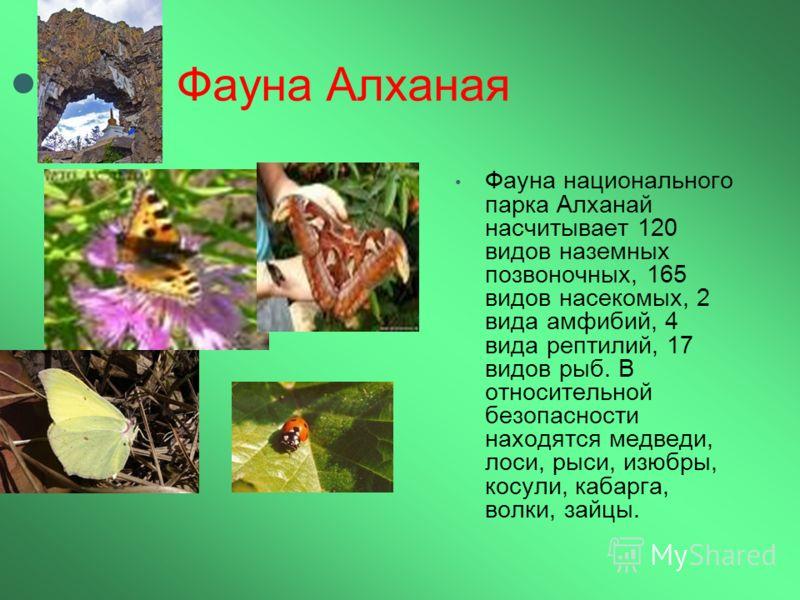 Фауна Алханая Фауна национального парка Алханай насчитывает 120 видов наземных позвоночных, 165 видов насекомых, 2 вида амфибий, 4 вида рептилий, 17 видов рыб. В относительной безопасности находятся медведи, лоси, рыси, изюбры, косули, кабарга, волки