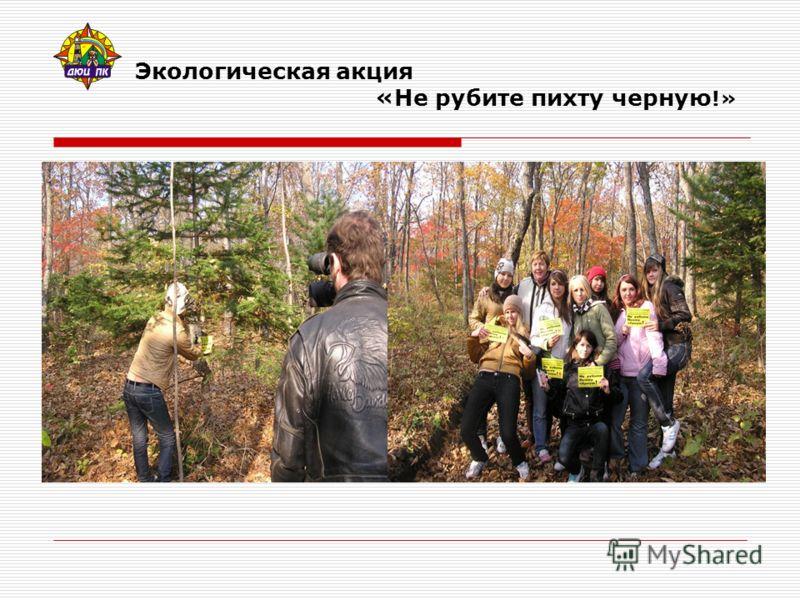 Экологическая акция «Не рубите пихту черную !»