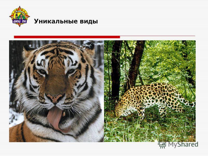 Уникальные виды