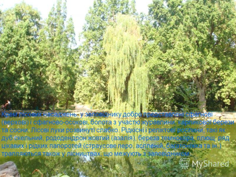 Крем лісових насаджень, у заповіднику добро представлені сфагнові (верхові) і сфагново-осокові, болота з участю журавлини, карликової берези та сосни. Лісові луки розвинуті слабко. Рідкісні і реліктові рослини, такі як дуб скельний, рододендрон жовти