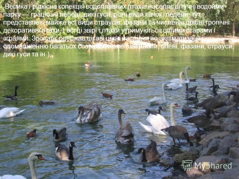 Велика і рідкісна колекція водоплавних птахів населяє штучні водойми парку граціозні лебеді, дикі гуси, різні види качок, ледени; тут представлені майже всі види страусів, фазани та численні дрібні тропічні декоративні птахи. І всі ці звірі і птахи у