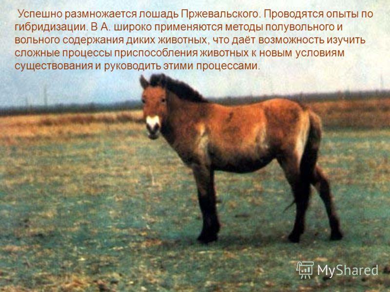 Успешно размножается лошадь Пржевальского. Проводятся опыты по гибридизации. В А. широко применяются методы полувольного и вольного содержания диких животных, что даёт возможность изучить сложные процессы приспособления животных к новым условиям суще