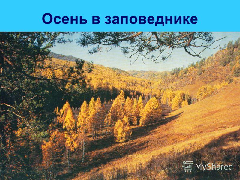Осень в заповеднике